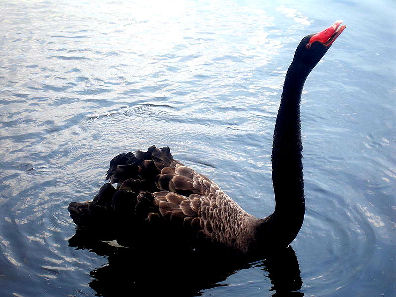 And....Here's The Black Swan We've Been Warning About