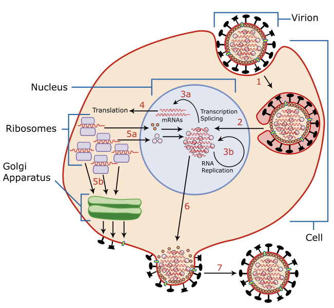 Creator Of US BioWeapons Act Says Coronavirus Is Biological Warfare Weapon